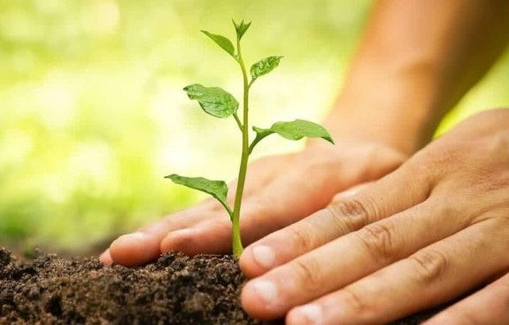 CNBB convida brasileiros a plantarem uma árvore no dia de Finados em memória memória dos que se foram
