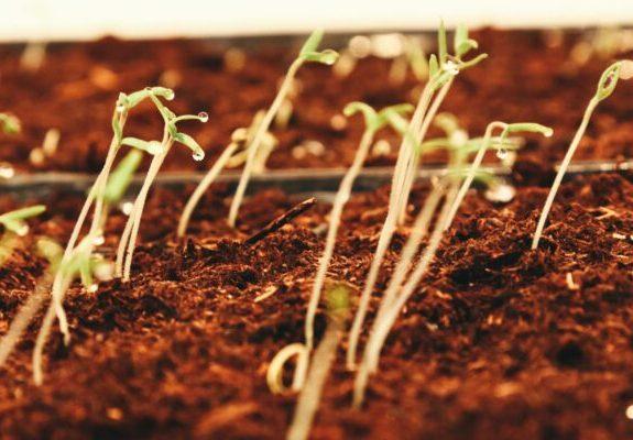 """""""Cabe a nós semear, porém, a força da semente é divina"""", afirma o papa"""